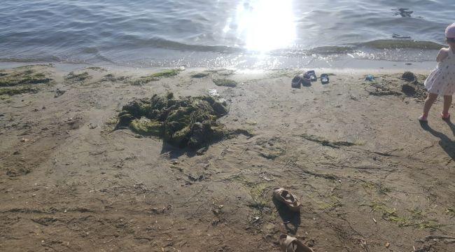 Balıkesir'in Erdek ilçesinde denizanası ve yosunlar sahile vurdu.