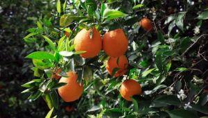 2020 yılında fiyatı en çok artan ürün portakal oldu