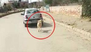 Aydın'da köpeğini otomobiline iple bağlayarak gezdiren kişiye para cezası verildi