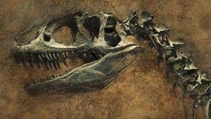 Güney Kore'de dinozor fosili bulundu