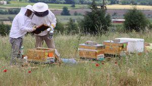 Hırsızlar bu kez arı kovanlarına dadandılar