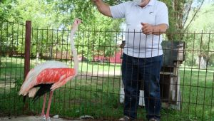 Manisa'da ayağı yanan flamingo hayata tutundu