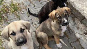 İzmir'de başı kesik köpeklerle ilgili 2 kişiye gözaltı