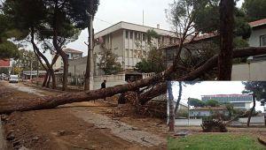 İzmir'de sağanak yağış etkili oldu! Kiraz'da ağaçlar devrildi