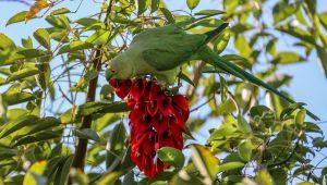 İzmir'in sevimli dostları yeşil papağanlar!