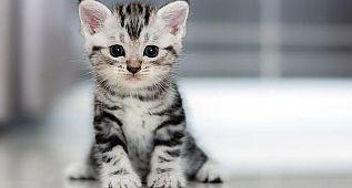 Minnoş yavru kediler çok tatlılar
